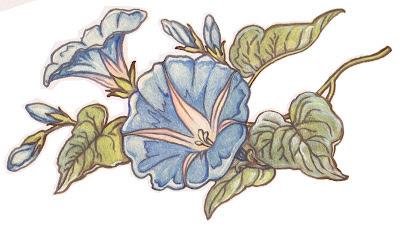 Morning Glory clipart lavender Morning blogspot n  Garden