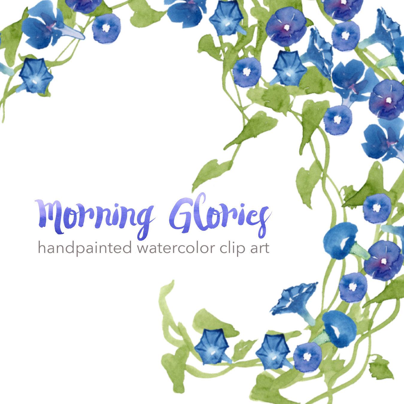 Morning Glory clipart watercolor #7
