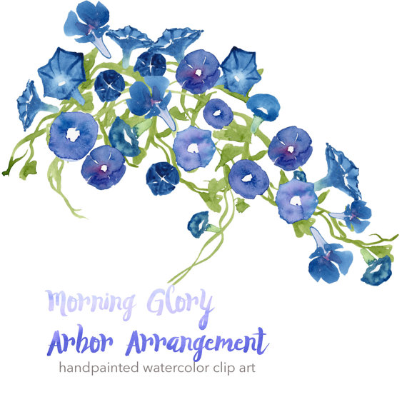 Morning Glory clipart watercolor #2