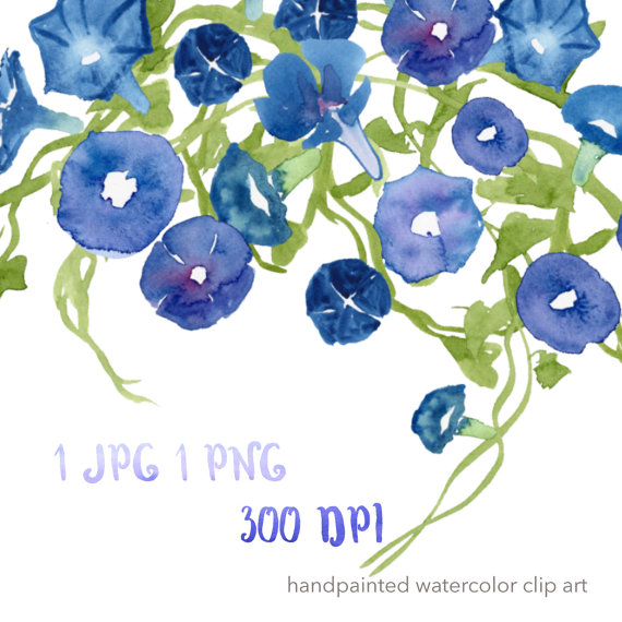 Morning Glory clipart watercolor #6
