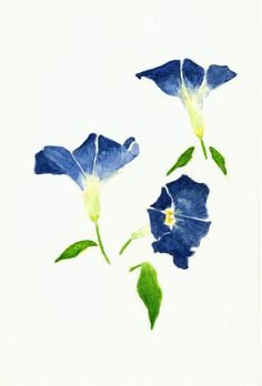 Morning Glory clipart watercolor #15