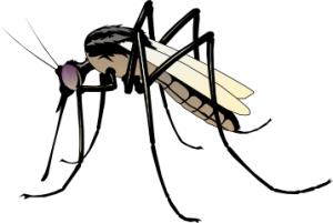 Mosquito clipart Art Clipartion Mosquito com Mosquito