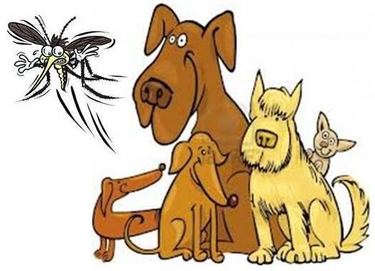 Mosquito clipart animal bite #6