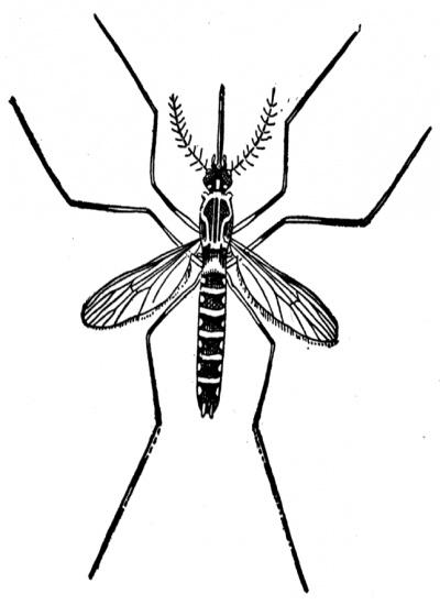Clipart Mosquito clip 4 art