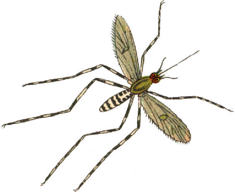 Clipart Mosquito Images Free Clipart