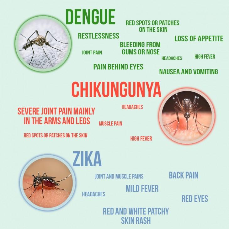 Mosquito clipart skin rash #9