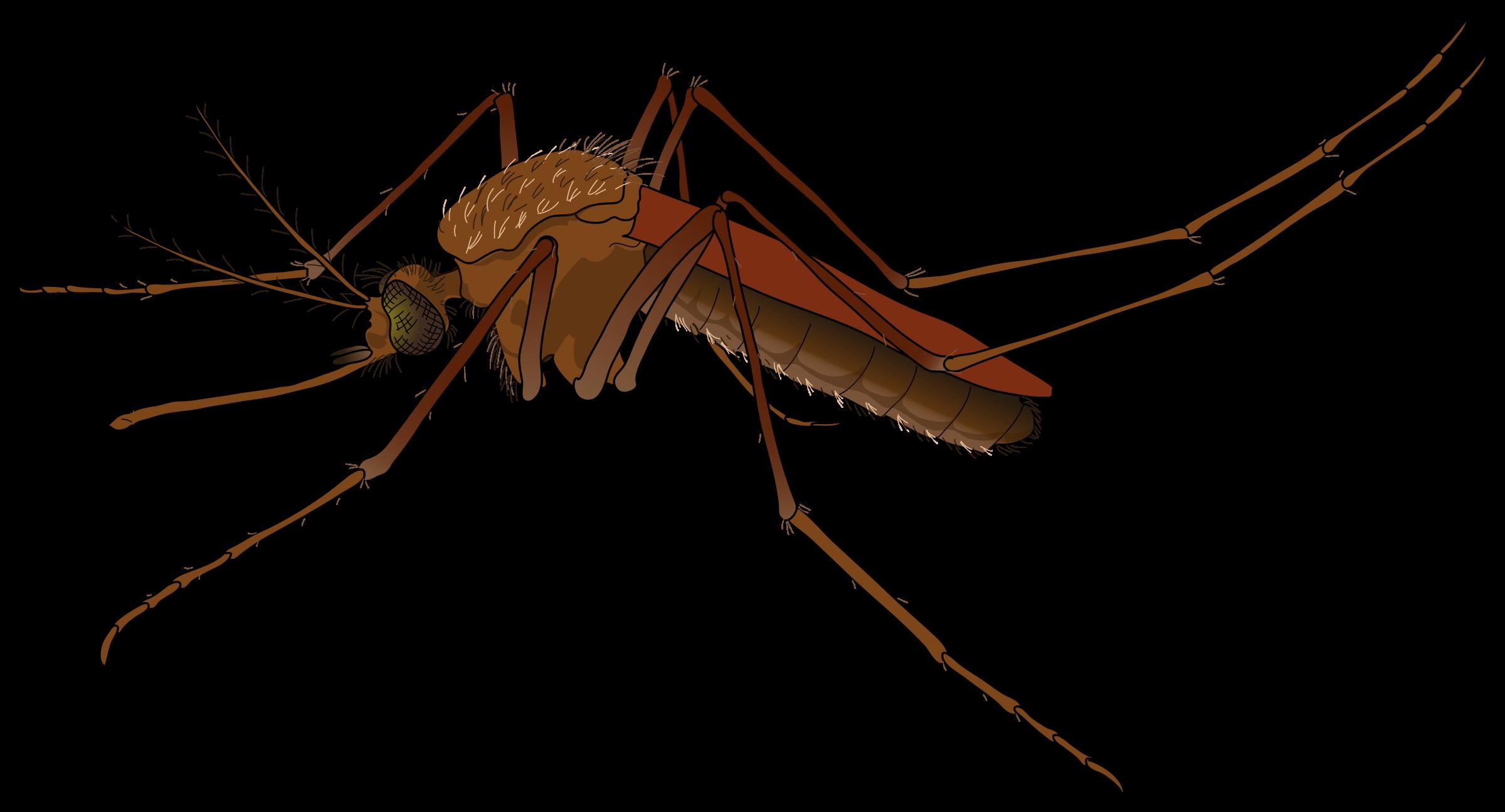 Mosquito clipart zika Virus Clipart Zika Zika Virus