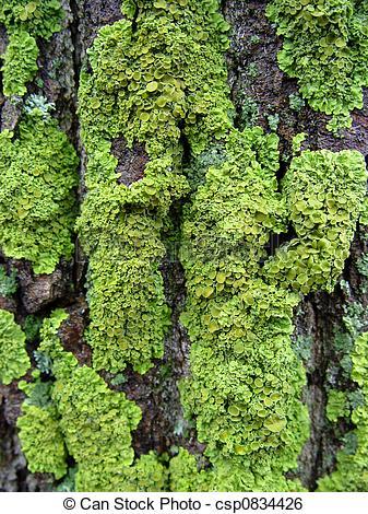Moss clipart Clipart Clipart Download – Moss