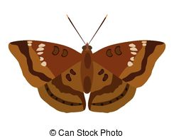 Moth clipart Moth on and Illustrations