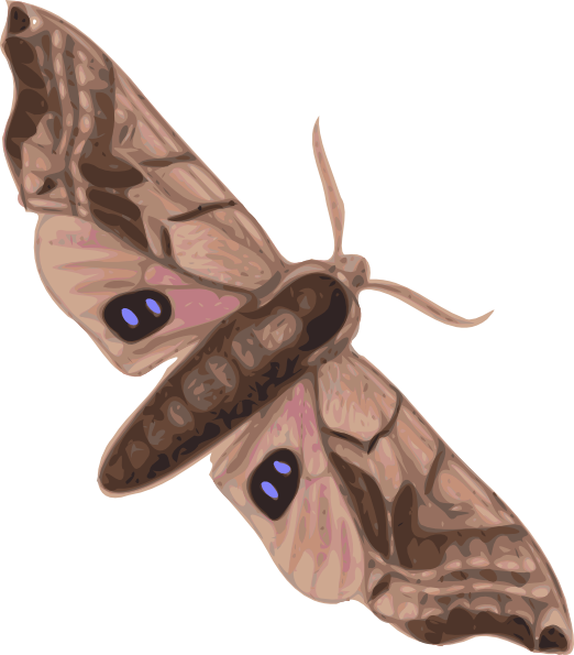 Moth clipart This at clip vector Download