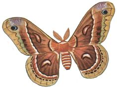 Moth clipart For > moths Art Pix