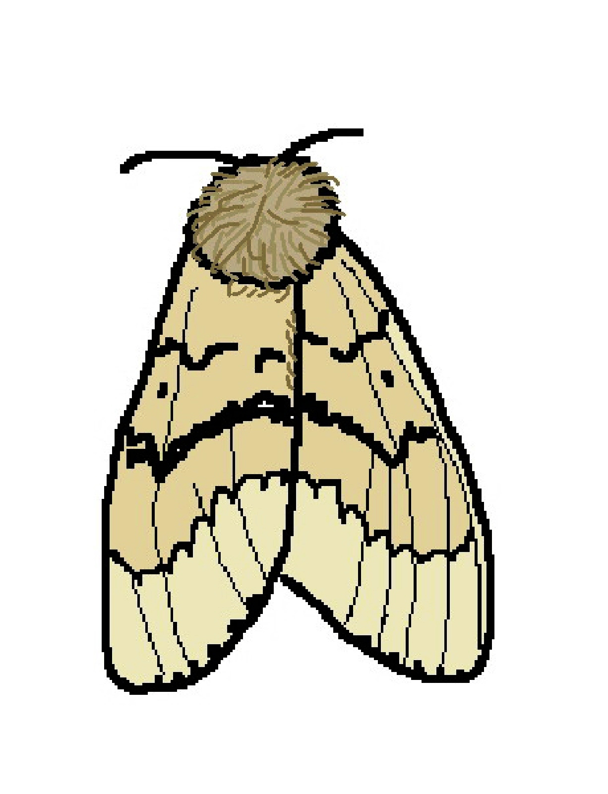 Moth clipart Moth Images moth%20clipart Free Clipart