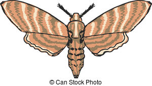Moth clipart Moth of and Illustrations