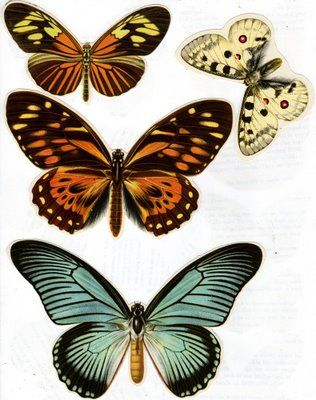 Moth clipart antique Today's Printables images Pinterest &