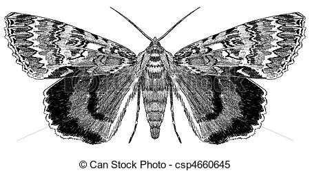 Moth clipart drawn #4