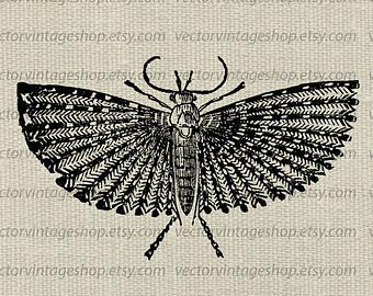 Moth clipart drawn #14