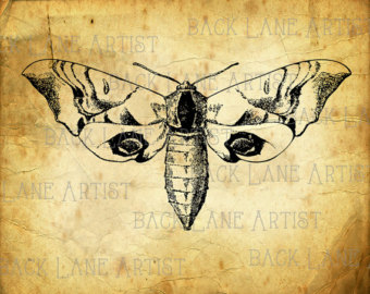 Moth clipart drawn Illustration La54 Drawing Download Vintage
