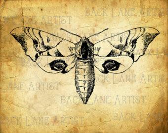 Moth clipart drawn #10