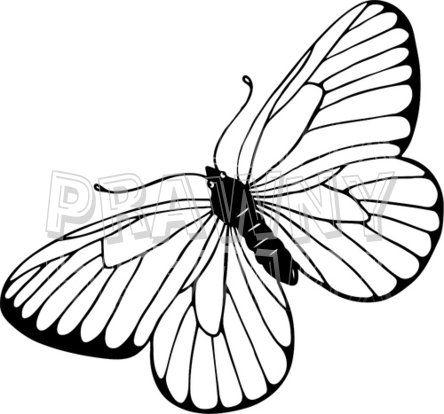 Moth clipart drawn #15