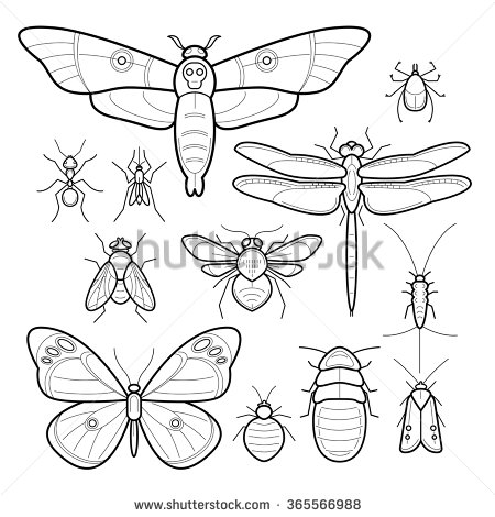 Moth clipart insect #15