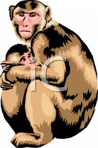 Mother And Baby clipart monkey Holding Royalty Mother Free Baby