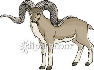 Mountain Goat clipart Picture Clipart Picture With Horns