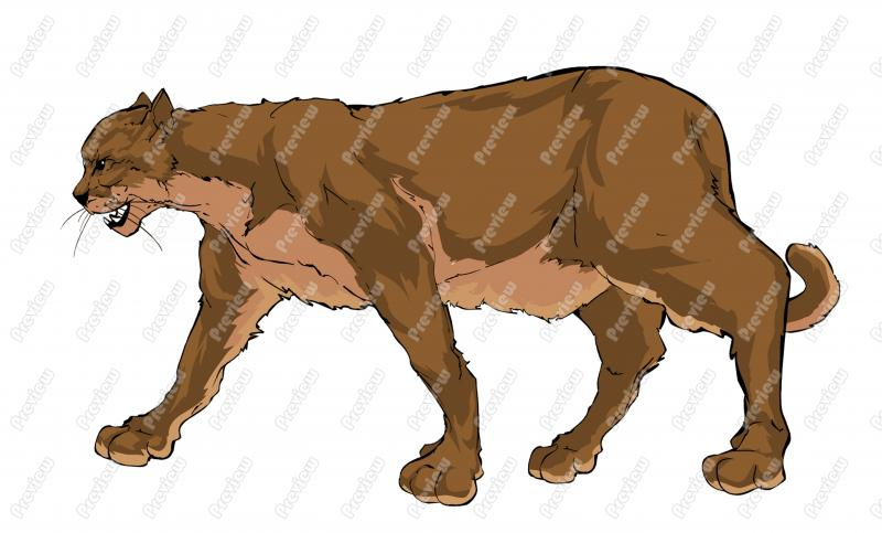 Mountain Lion clipart Lion cartoon royalty drawing Clipart