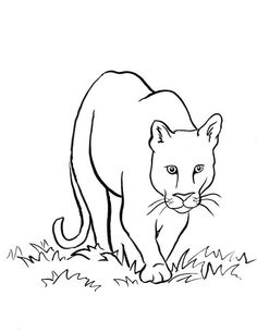 Drawn mountain line art To lots couple drawings lion2