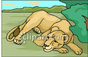 Mountain Lion clipart sleeping lion #13