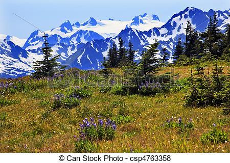 Mountain Ridge clipart snow mountain Park Northwest Mountains Wildflowers