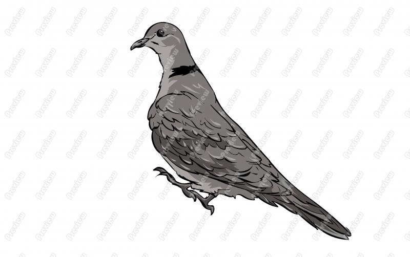 Mourning Dove clipart Character Ringed Royalty Bird Clip