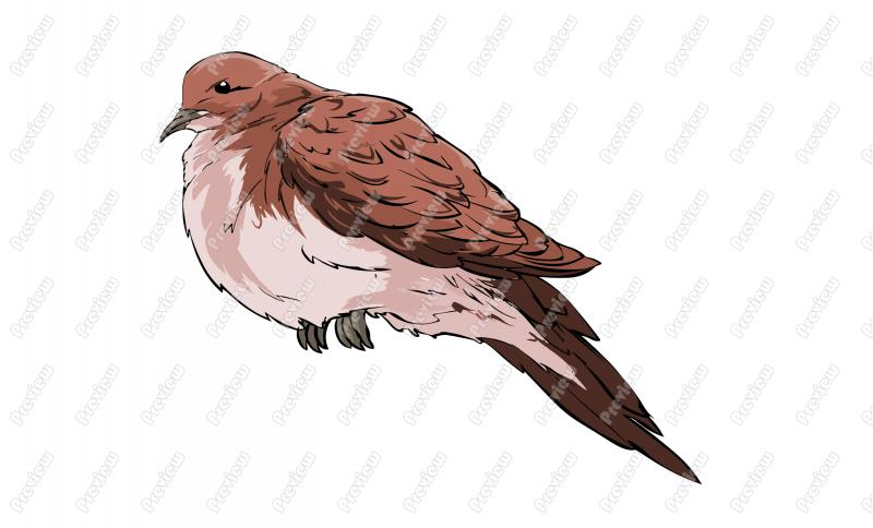 Mourning Dove clipart Art Dove  Clip Royalty