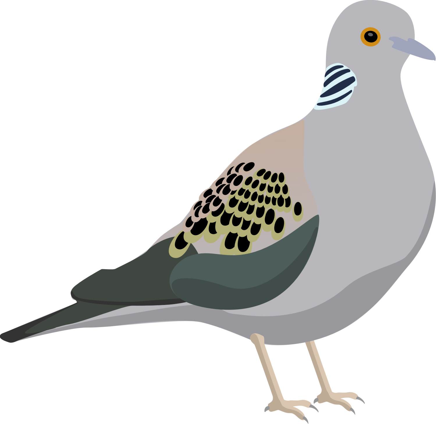 Turtle Dove clipart Clipart dove Vectors turtle Clipart