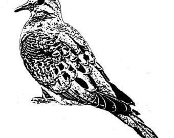Mourning Dove clipart Bird files art mourning &