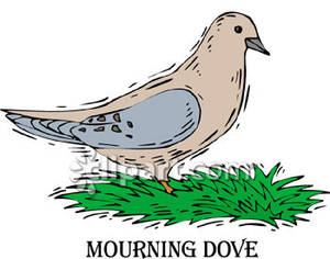 Mourning Dove clipart Grass Picture Clipart In Royalty