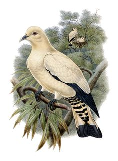 Mourning Dove clipart animated Image anousdeux04 Animated Graphics
