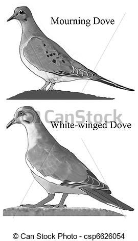 Mourning Dove clipart faith Stock on images best doves