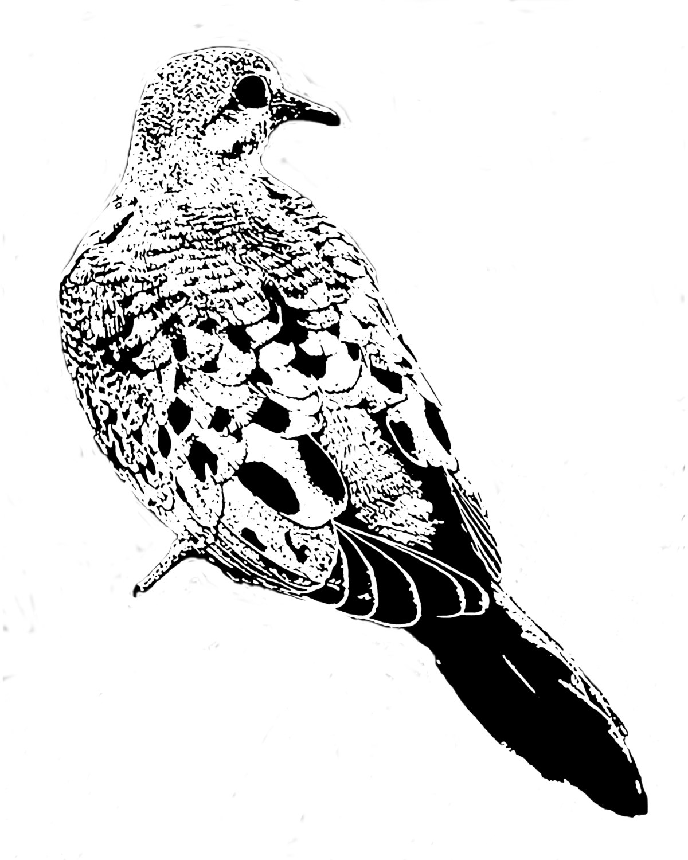 Mourning Dove clipart line drawing White bird digital (digi