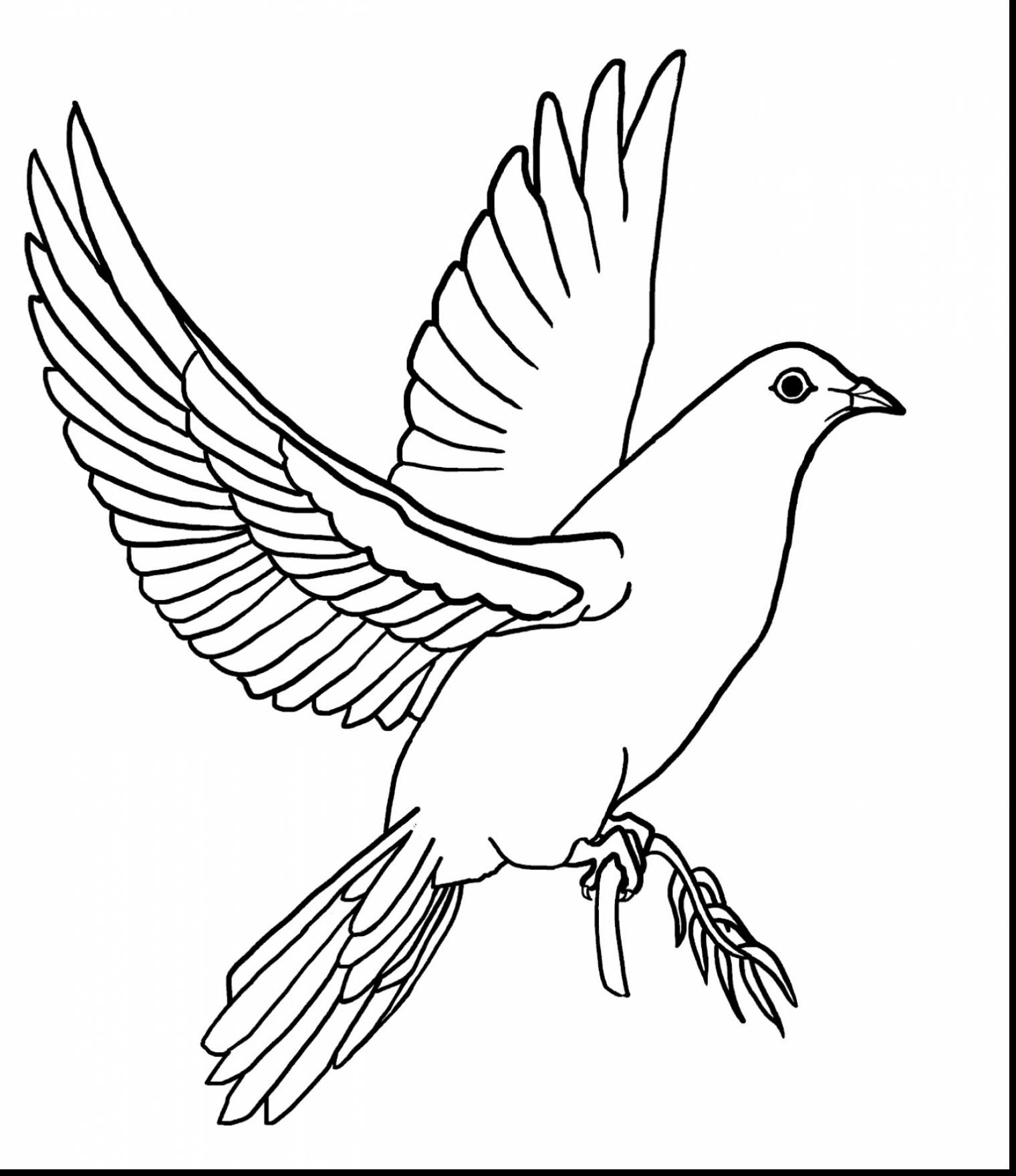 Mourning Dove clipart line drawing Page coloring holy dove pencil