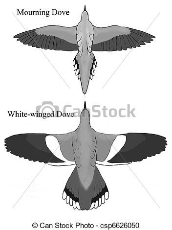 Mourning Dove clipart line drawing Images stock Mourning doves http://comps
