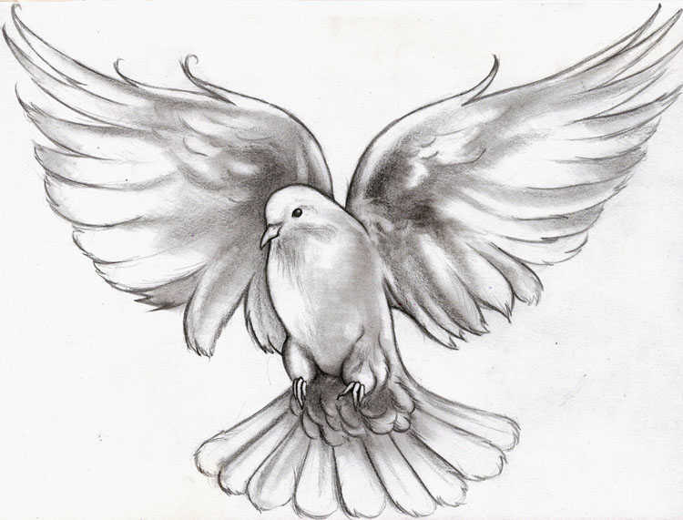 Turtle Dove clipart flight sketch #7