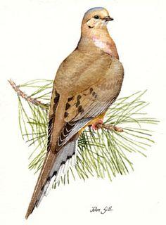 Bing Bird in Mourning images