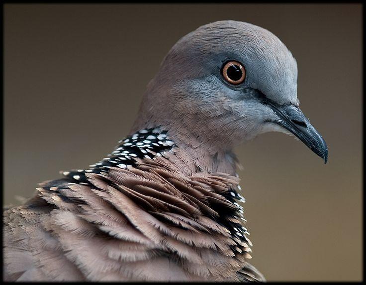 Animals best images DOVE Birds