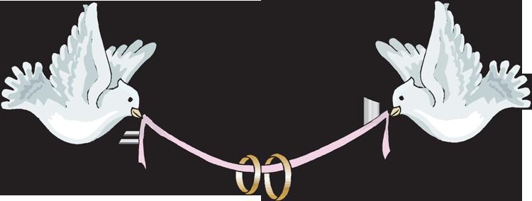 Mourning Dove clipart wedding ribbon Klejonka Doves Pin Like Doves