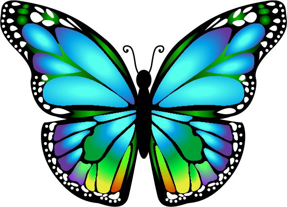 Monarch Butterfly clipart masculine #8