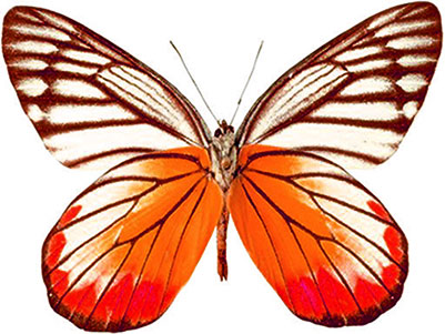 Moving clipart butterfly And Butterfly Butterfly Animated Gifs