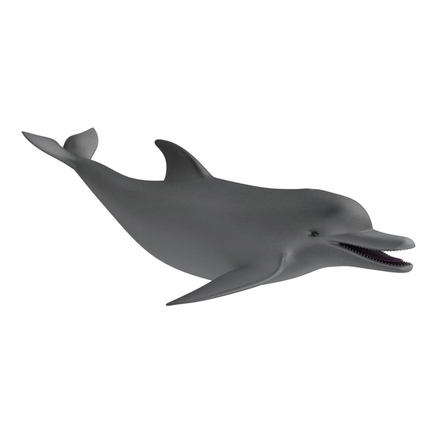 Moving clipart dolphin Free Download Related Moving Art