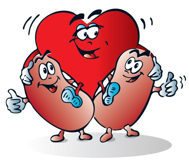 Moving clipart kidney Heart! on best Love images