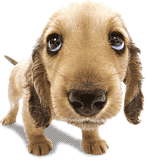 Moving clipart puppy #8