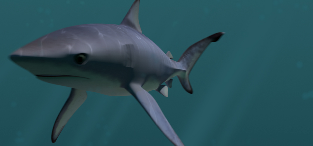 Moving clipart shark Moving Shark shark kb icon